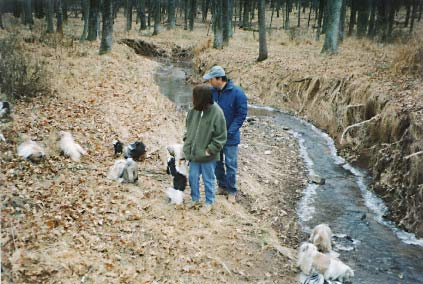 Shih Tzu dogs in woods